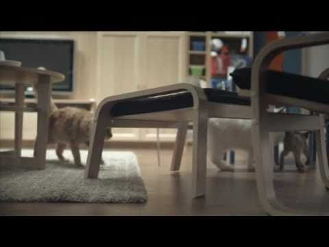 100 Cats Released in IKEA